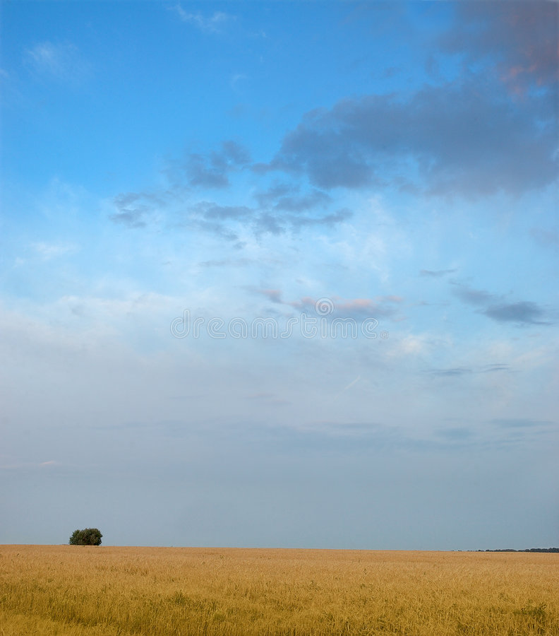 Lonely tree. A field. The sky. stock photos