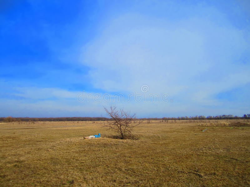 Lonely tree in the fields.  royalty free stock photos