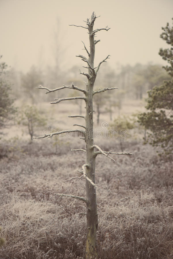 Lonely tree in frosty winter bog - aged photo. Lonely tree in frosty winter bog with frozen nature - aged photo effect, vintage retro stock photo