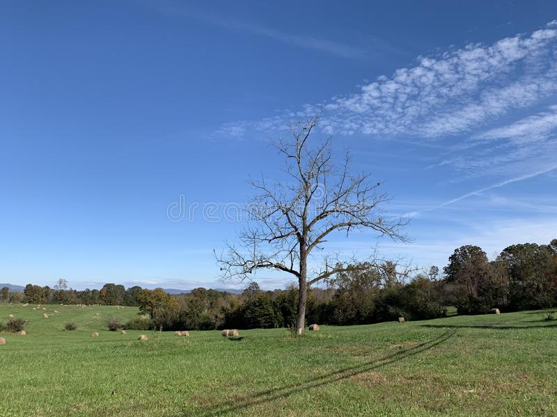A lonely tree in a grassy landscape with the blue sky and white clouds. A beautiful lonely oak tree in a grassy landscape with the blue sky and white clouds stock photos