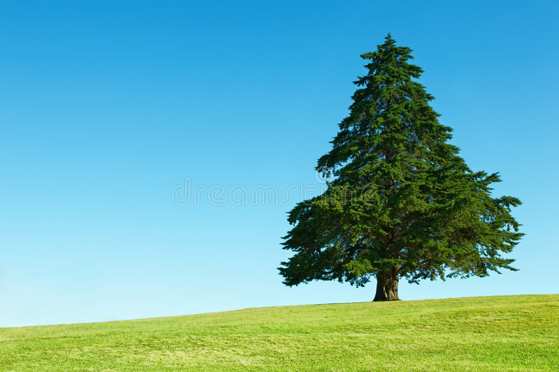 Lonely tree on green field. Against blue sky background stock photography