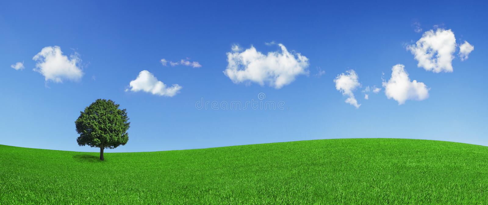 Lonely tree on a green field. Panoramic format of a lonely tree on a green field, on a clear blue sky with beautiful clouds royalty free stock photo