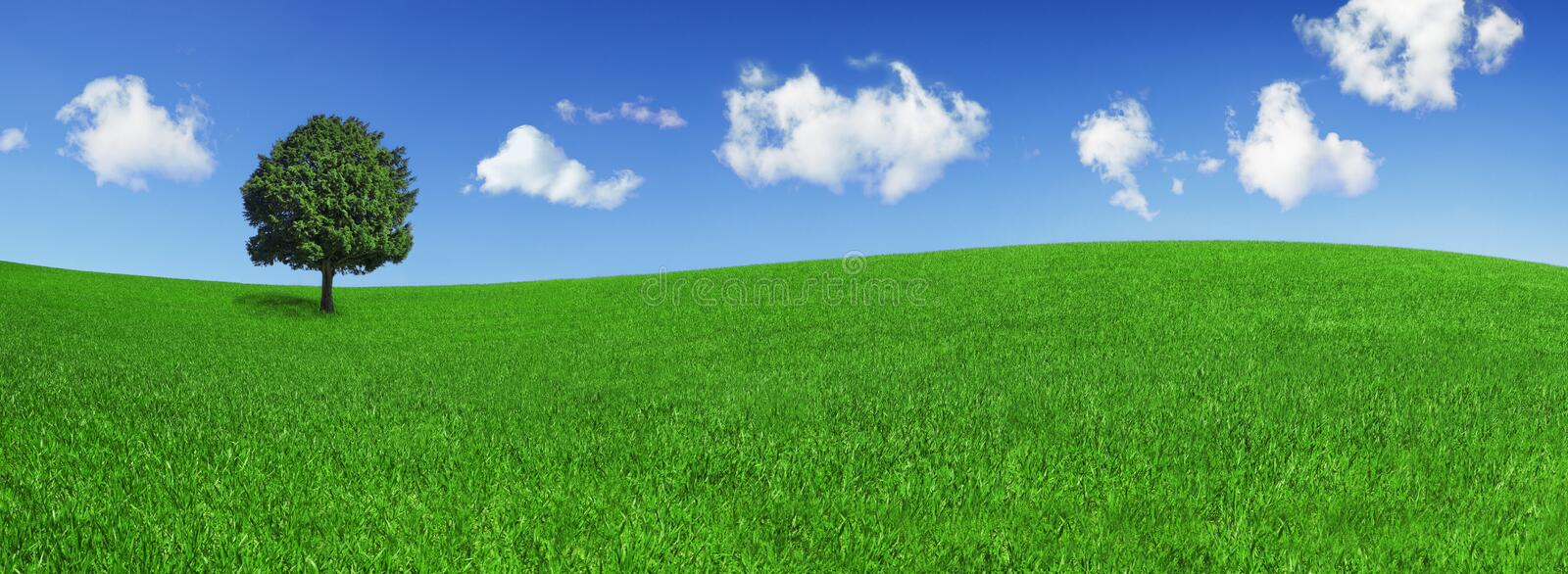 Lonely tree on a green field. Panoramic format of a lonely tree on a green field, on a clear blue sky with beautiful clouds stock photo