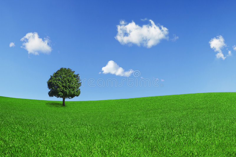 Lonely tree on a green field. On a clear blue sky with beautiful clouds royalty free stock images