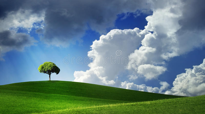 Lonely tree on green filed stock photography