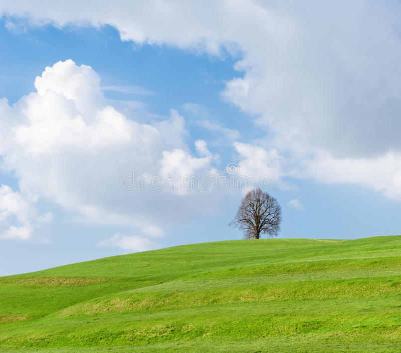 Lonely tree on green hill, blue sky and white clouds royalty free stock photos