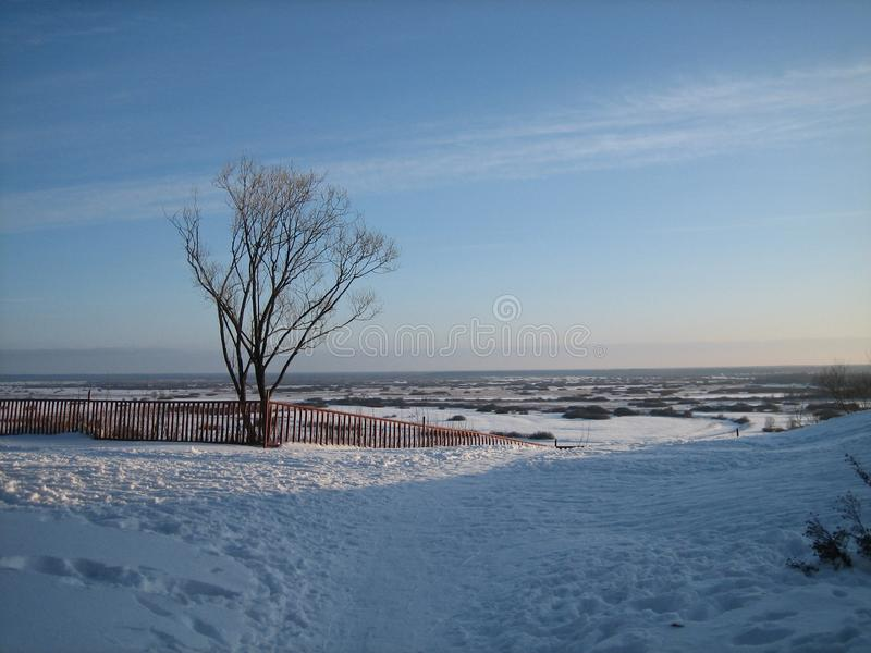 Lonely tree on a high rise over the vast expanses of snow-covered meadows in winter day before sunset stock image