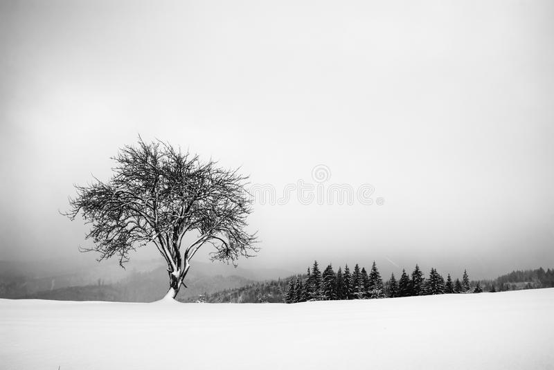 Lonely tree on a hill. Black and white stock photography