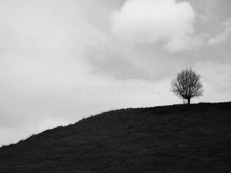 Tree on a hill royalty free stock photo