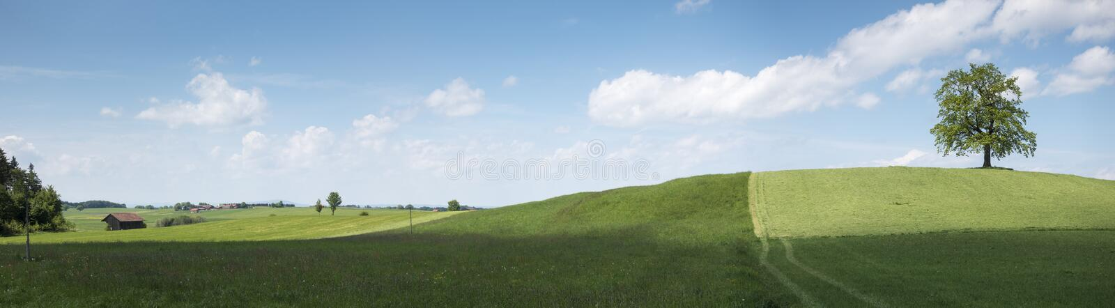 Lonely tree on a hill stock photo