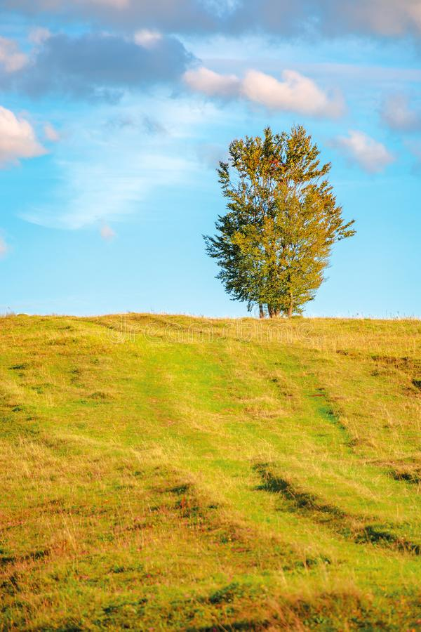 Lonely tree on the hillside in warm evening light. Beautiful countryside scenery at sunset. weathered grass on the meadow. gorgeous turquoise sky with dynamic stock image