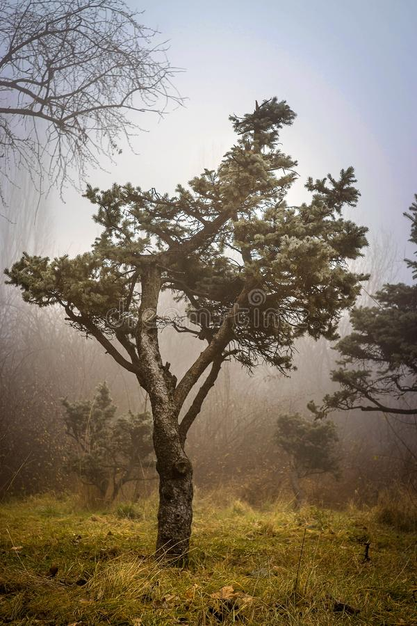 Lonely tree in IOR Park. Lonely tree in the IOR Park in a cold and foggy December morning royalty free stock photography