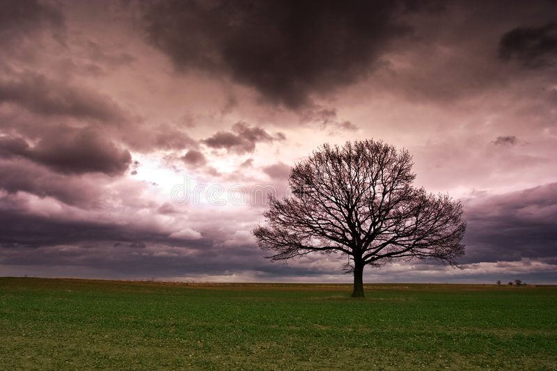 Lonely Tree Landscape Stock Photography