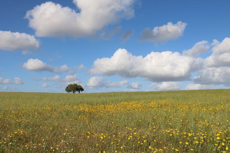 Lonely tree. landscape of alentejo. stock photo