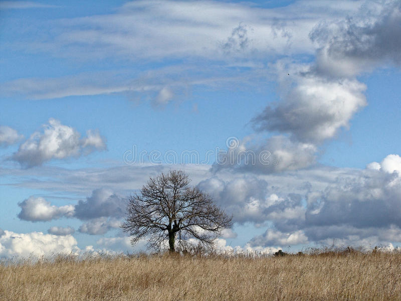 Lonely tree without leaves in late autumn in field. Infinite blue sky with clouds. royalty free stock photos