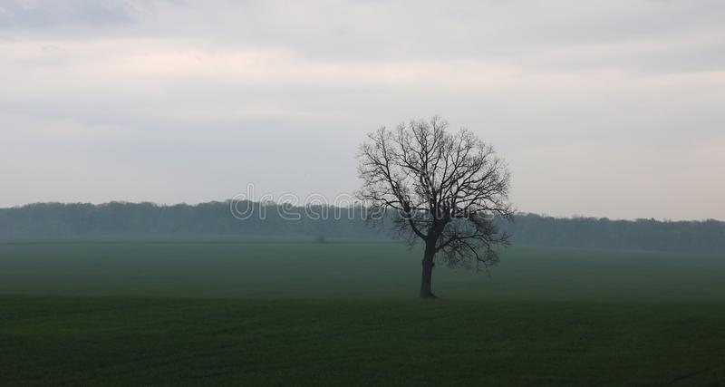 Lonely tree without leaves in spring in field on green grass in cloudy weather stock photo