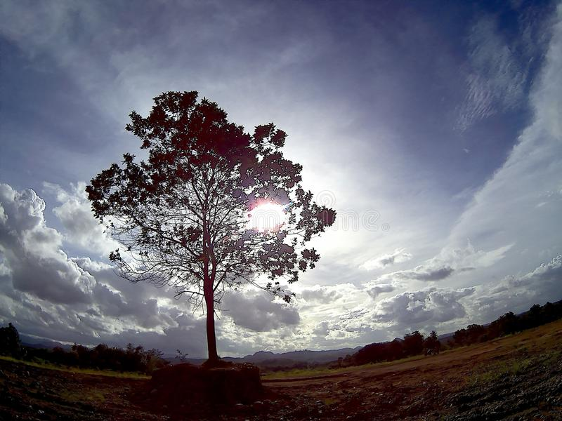 Lonely tree. Location : pandeglang, Indonesia royalty free stock photo
