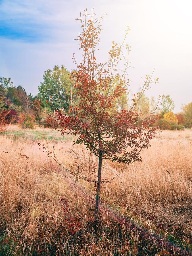 A lonely tree in the middle of field. royalty free stock photos