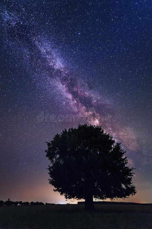 Lonely tree in the Milky Way stock image