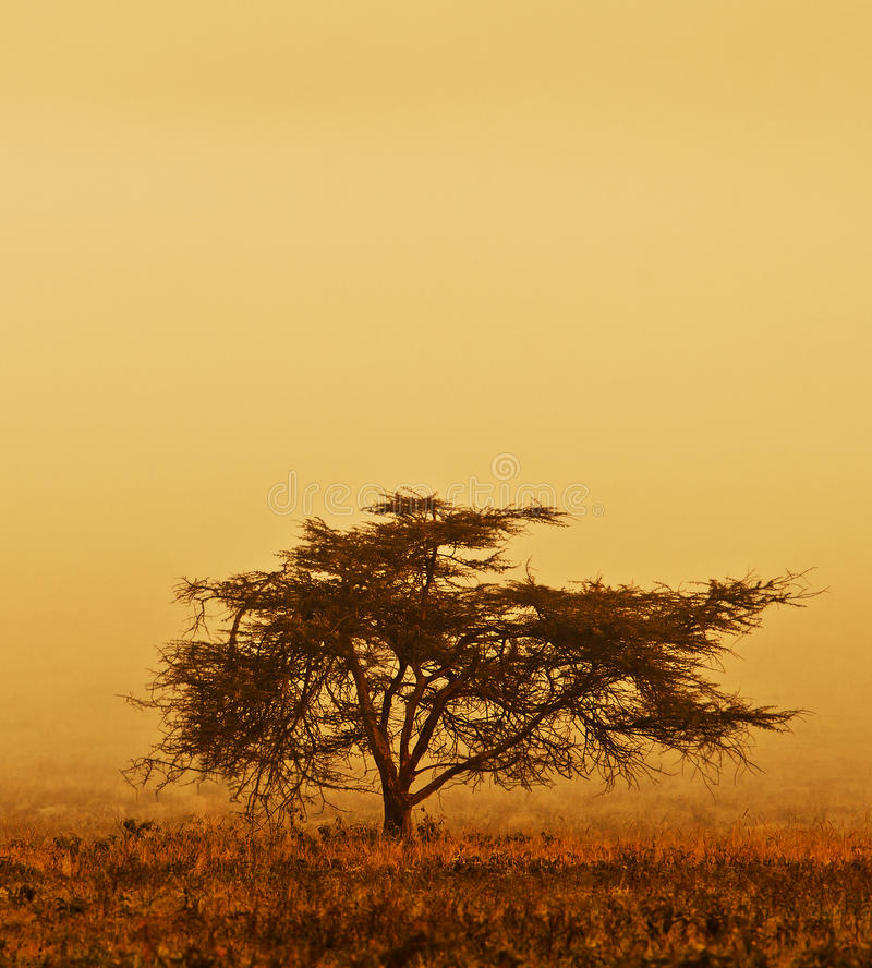 Lonely tree in the mist. Nature autumn season, african landscape in the morning, sepia toned stock photo