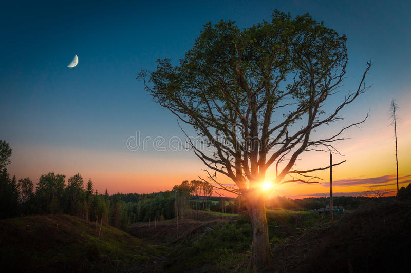 Lonely Tree with Moon at Sunset. Summer time stock photo