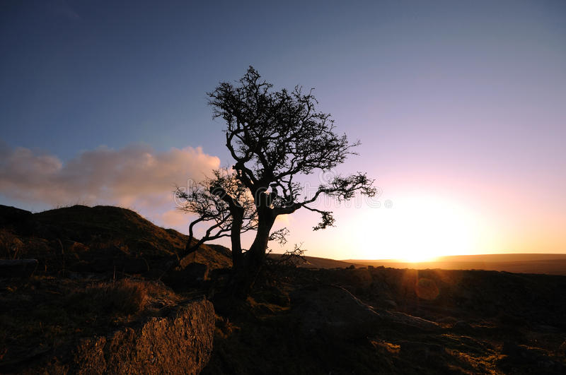 Download A lonely tree on the moor stock photo. Image of calm - 24566602