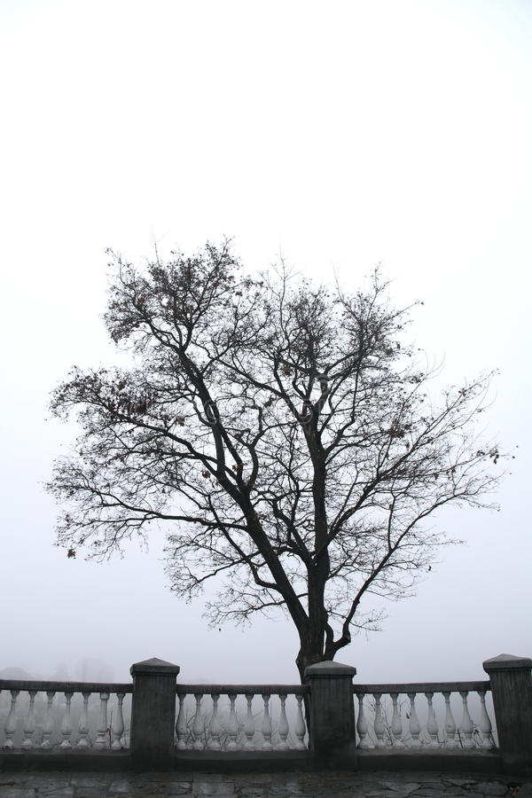 Lonely tree in the morning foggy park stock photos