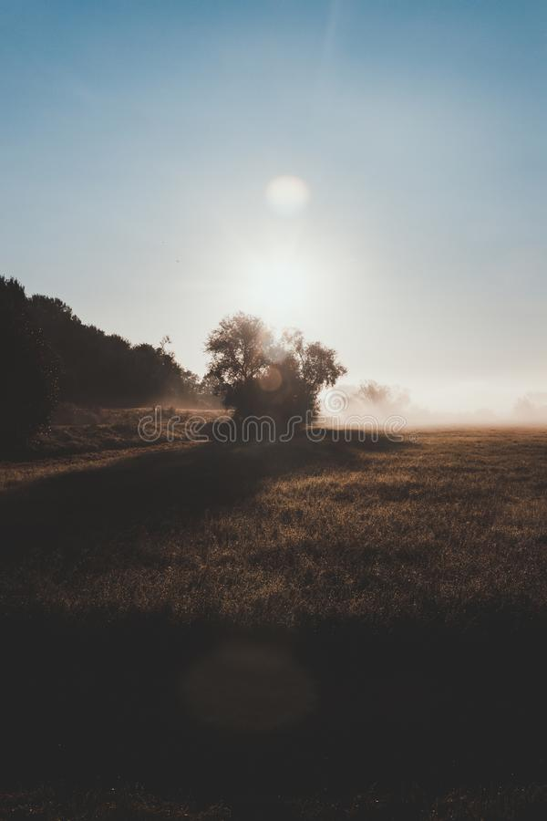 Lonely Tree In The Morning Light stock images