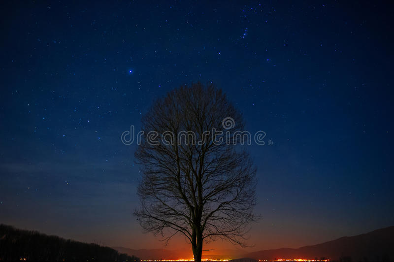 Lonely tree in the night sky. Night landscape, a lonely tree under the stars royalty free stock photos