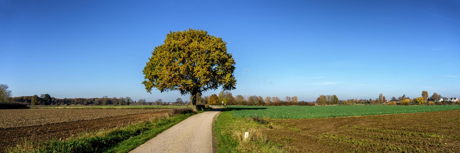 Lonely tree in the November sun near the small village of Papenbeek NL. Close to the Maas river stock photos