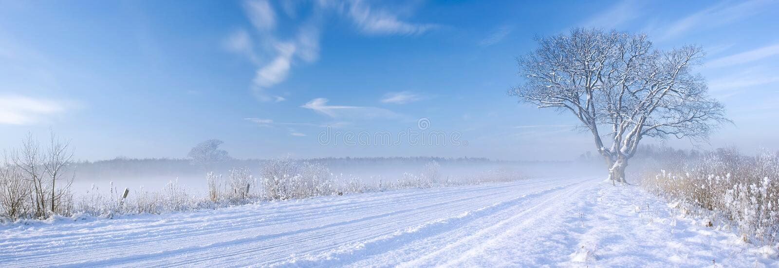 Lonely tree at off-road in the winter royalty free stock images