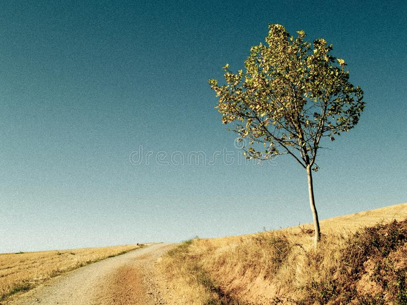 Lonely tree on a plain. Solitary tree on a plain to the side of a desert road with a blue sky royalty free stock photos