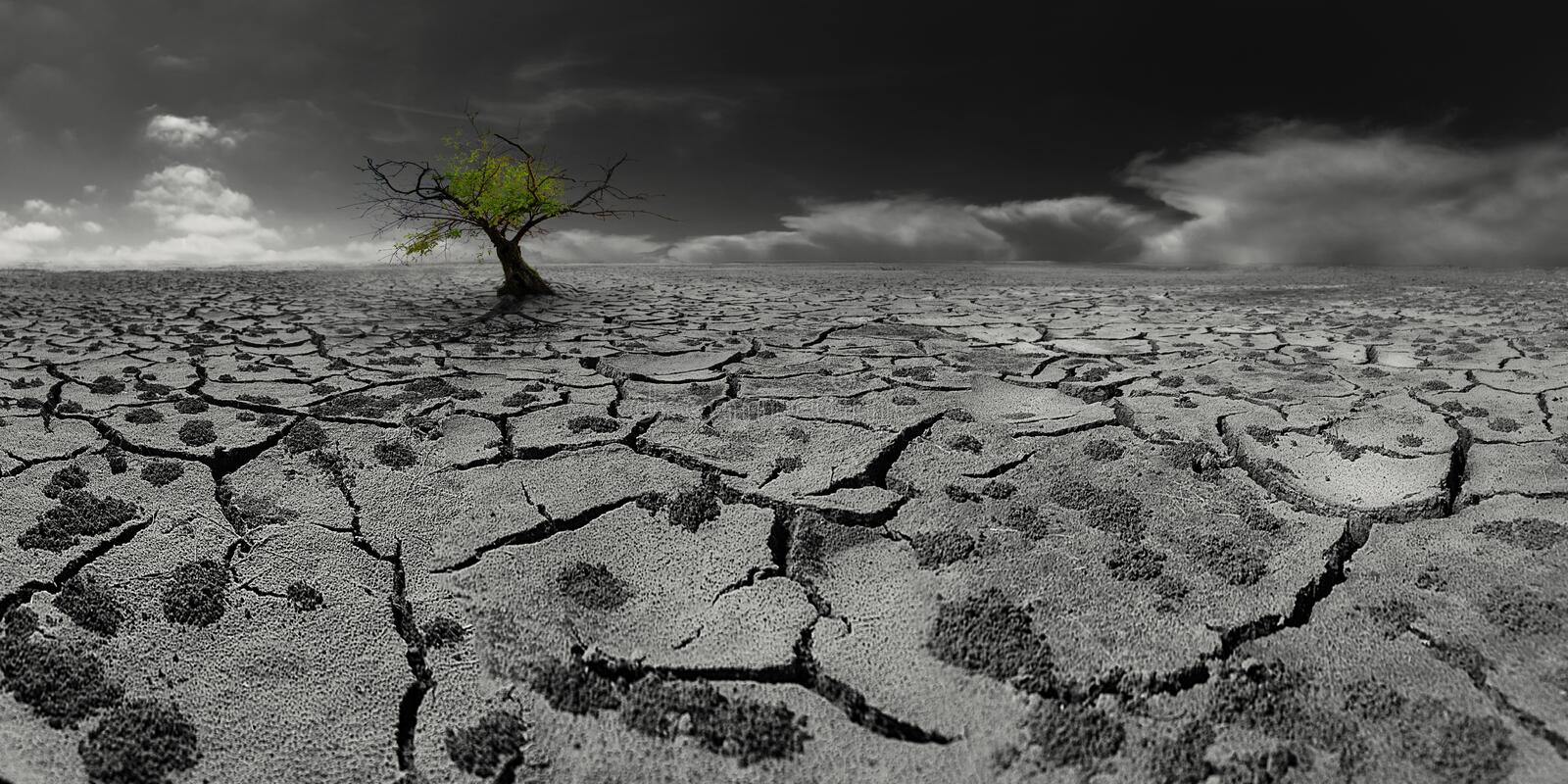 Lonely tree in a post-apocalyptic desert landscape royalty free stock photography