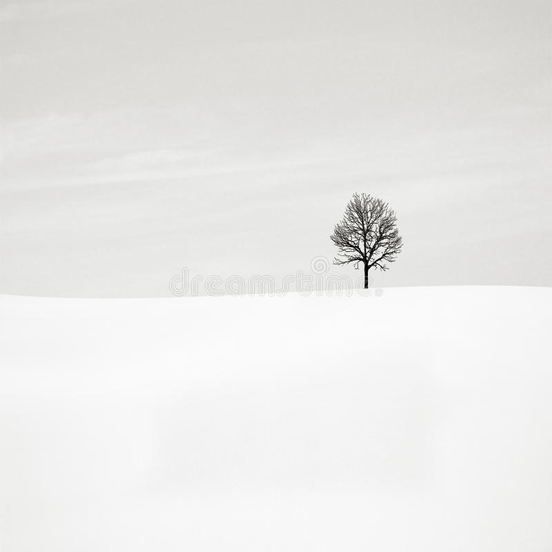 Lonely tree. Pure minimalism, winter and lonely tree royalty free stock image