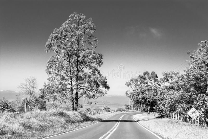 Lonely tree on the road stock images