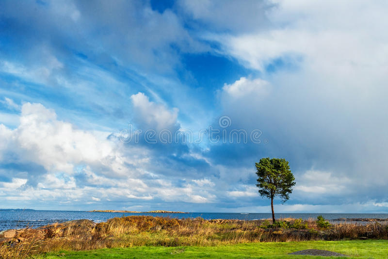 Download Lonely tree at sea stock image. Image of farm, color - 27468811