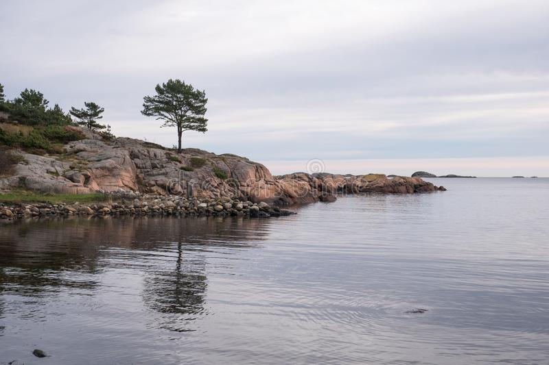 Lonely tree at the seashore evening royalty free stock image
