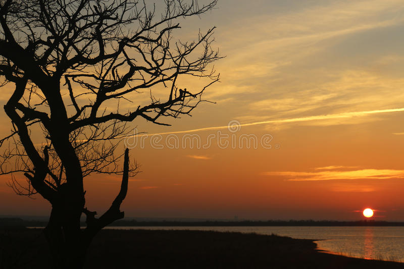 Lonely tree on the seashore on a sunset,when the sun on the horizon stock photo