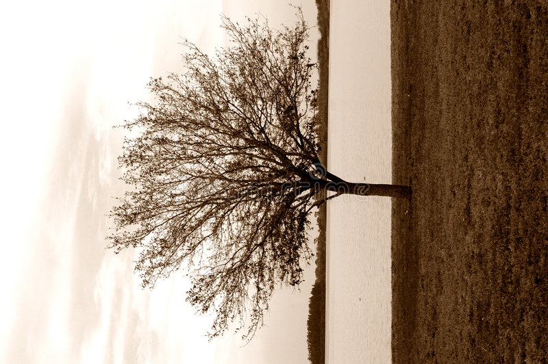 Download Lonely Tree Sepia Stock Image - Image: 1932631