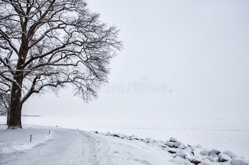 Lonely tree on shore in winter stock photos