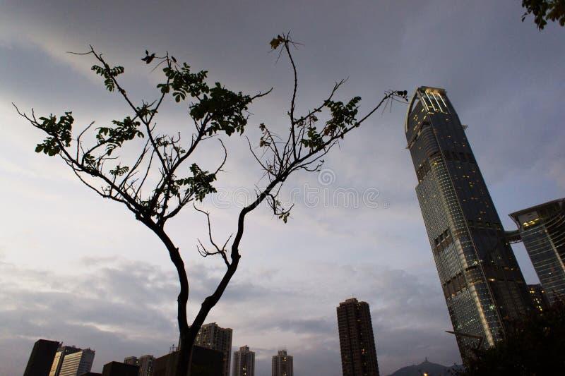 Lonely tree with skyscraper. Tsuen Wan, Hong Kong, China royalty free stock image