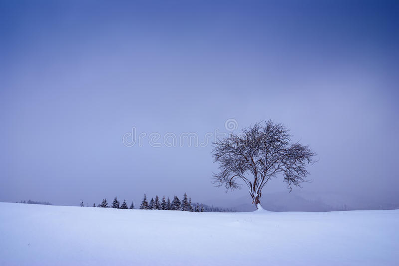 Lonely tree on a snow-capped hill royalty free stock photo