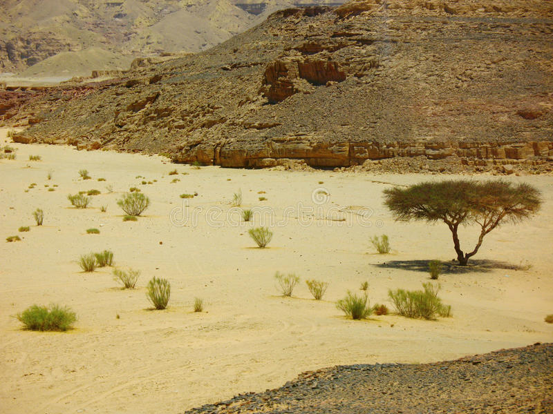 Lonely tree and some bushes in the desert