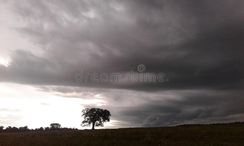 A lonely tree and the storm royalty free stock images