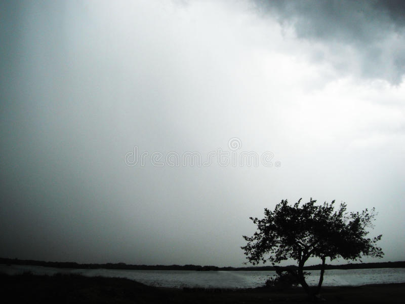 Lonely tree in the storm stock photos