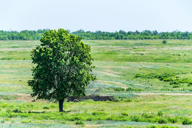 Lonely tree in summer steppe beautiful landscape stock photo