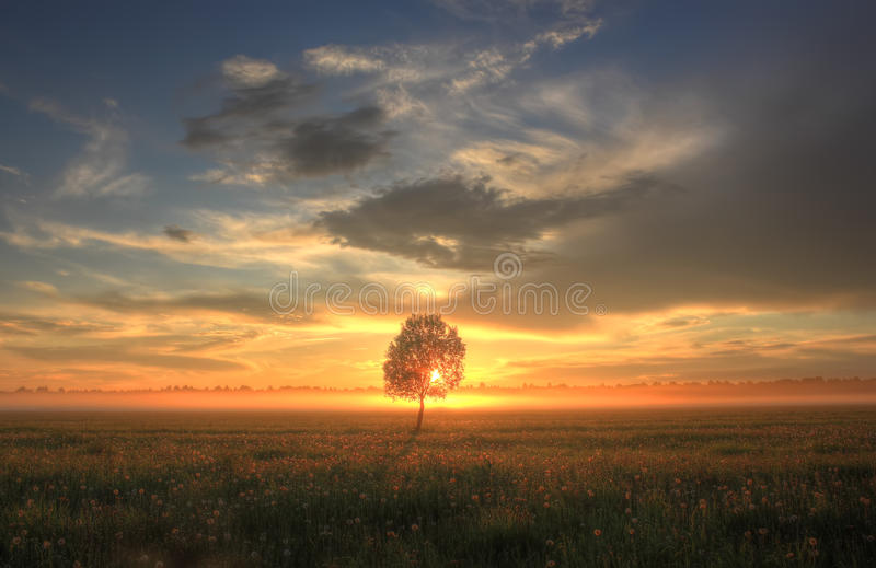 Lonely tree on sunset, Russia royalty free stock images