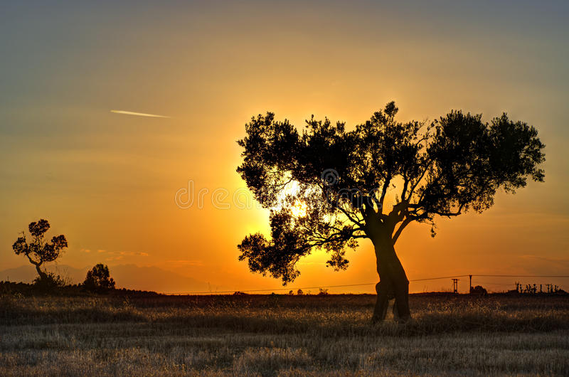 Download Lonely tree at sunset stock photo. Image of sunset, loneliness - 33534994