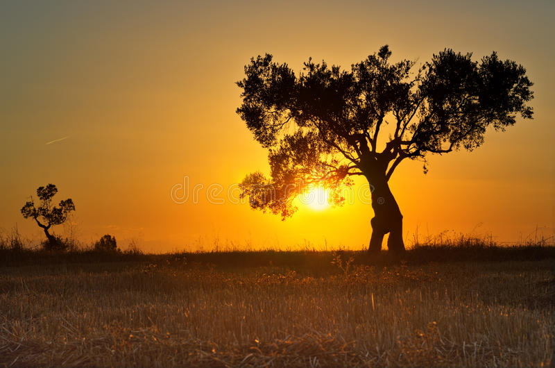 Download Lonely tree at sunset stock photo. Image of orange, edge - 33535028
