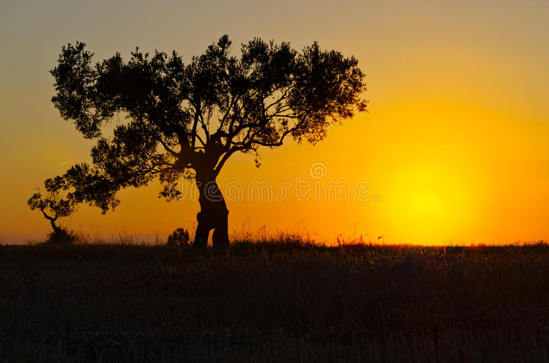 Lonely Tree At Sunset Stock Photos